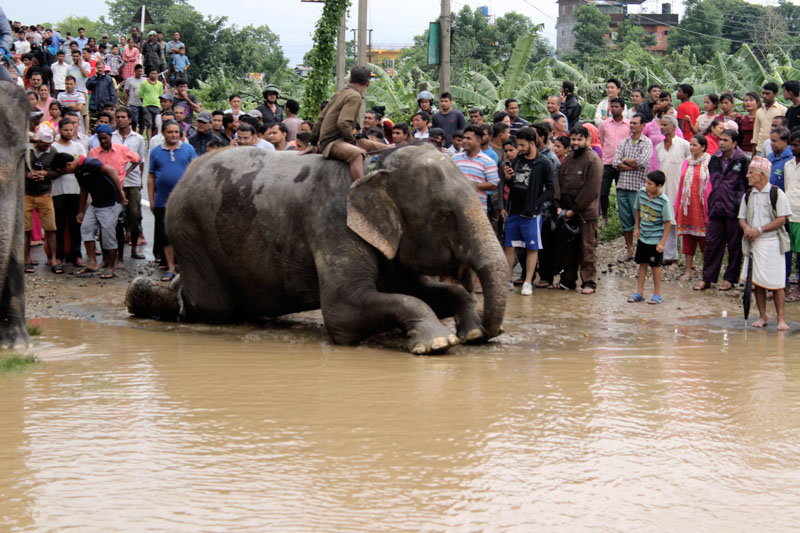 Elephants help rescue hundreds from flooded Nepali safari park