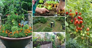 Kitchen Gardens in the Wealthy West, a COVID Hobby: in Nepal, a Way out of Poverty and Social Exclusion