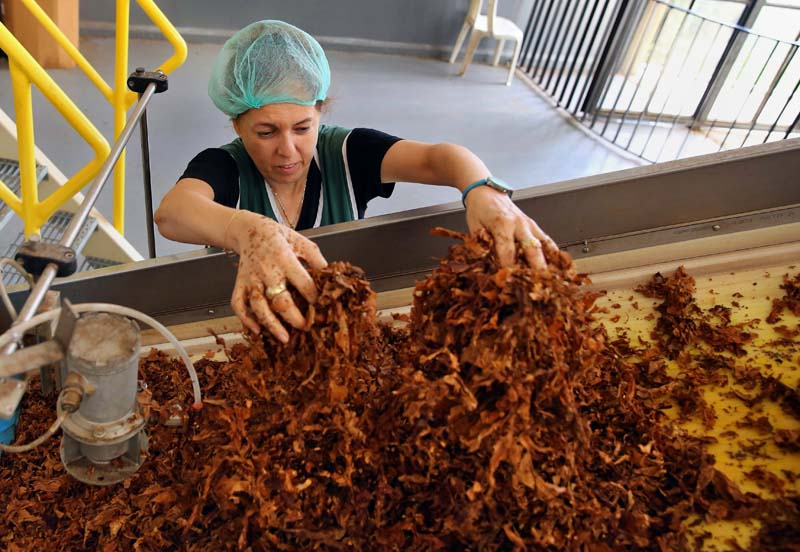 A Lebanese worker moves tobacco on the cigarette production line at the state-owned Regie Libanaise des Tabacs et Tombac, factory in the Hadath district of Beirut, Lebanon, on August 8, 2016. Photo: AP