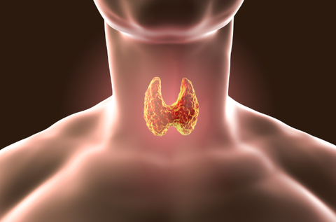 Understanding The Mysterious Thyroid Gland (and Diseases)